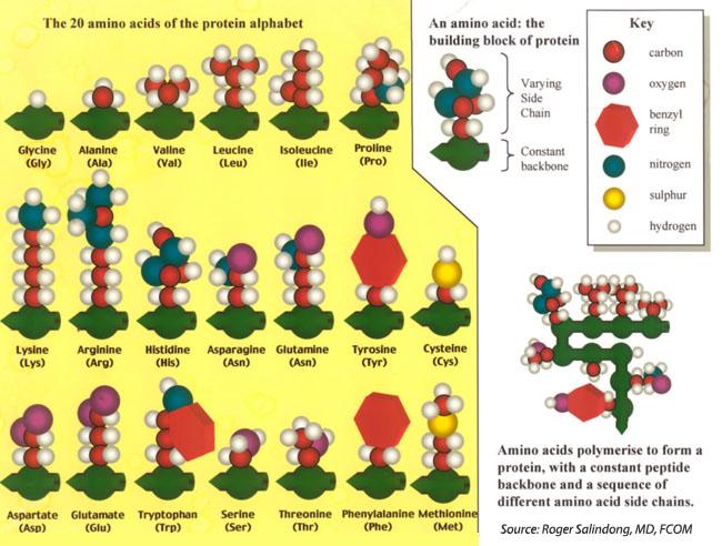 Laminine amino acid effects