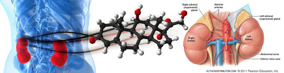 laminine stress hormone cortisol