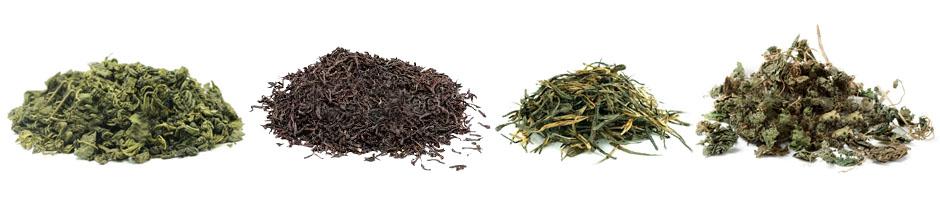 herb plants heal cancer kidney