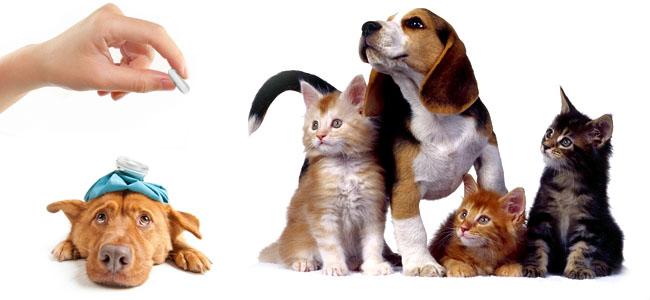 laminine dogs cats