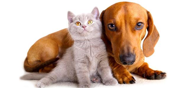 laminine pets