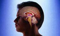 brain nerve