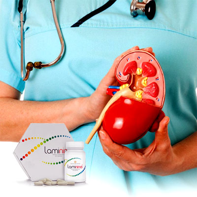 how laminine helps with kidney problem